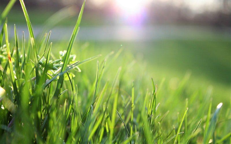 lawn-care-landscape-management-services-wichita-ks